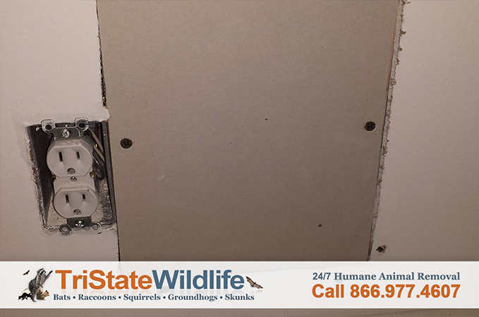 Rodent Removal Amp Decontamination In Westchester Ny