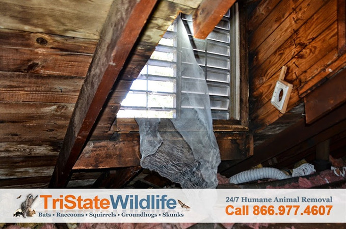 Attic Decontamination Amp Restoration Services In
